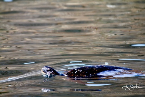 Turtle 3 WM1